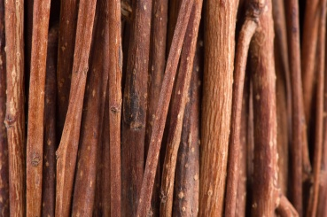 Tree Branches (Brushwood) Macro Background